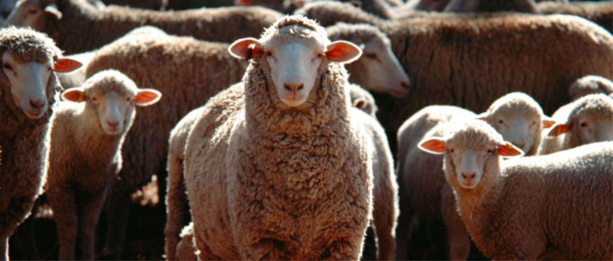 HUMAC® Natur AFM bárányok