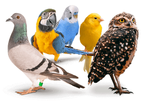 huminsavak madaraknak