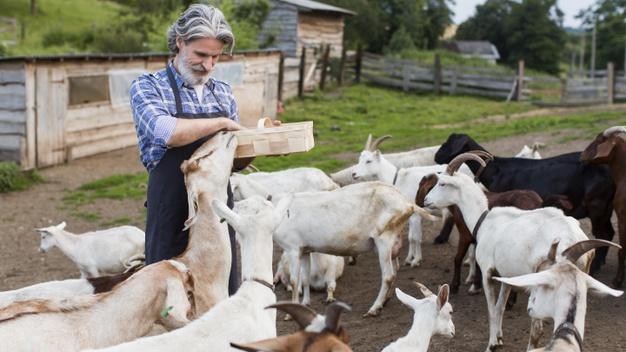 Kecsketenyésztés a Humac takarmánykiegészítővel