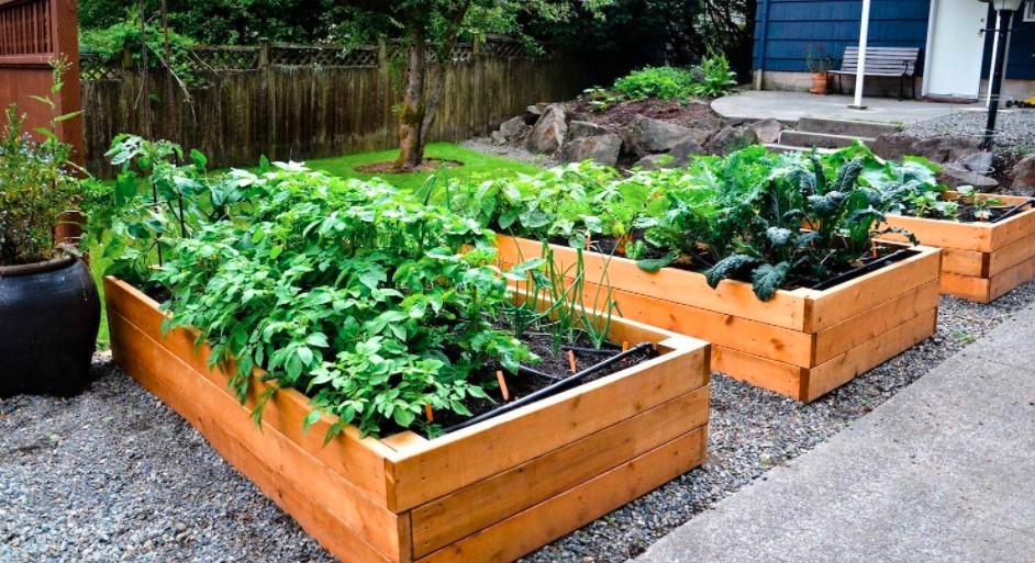 Humac Agro a gyógy- és fűszernövényekhez