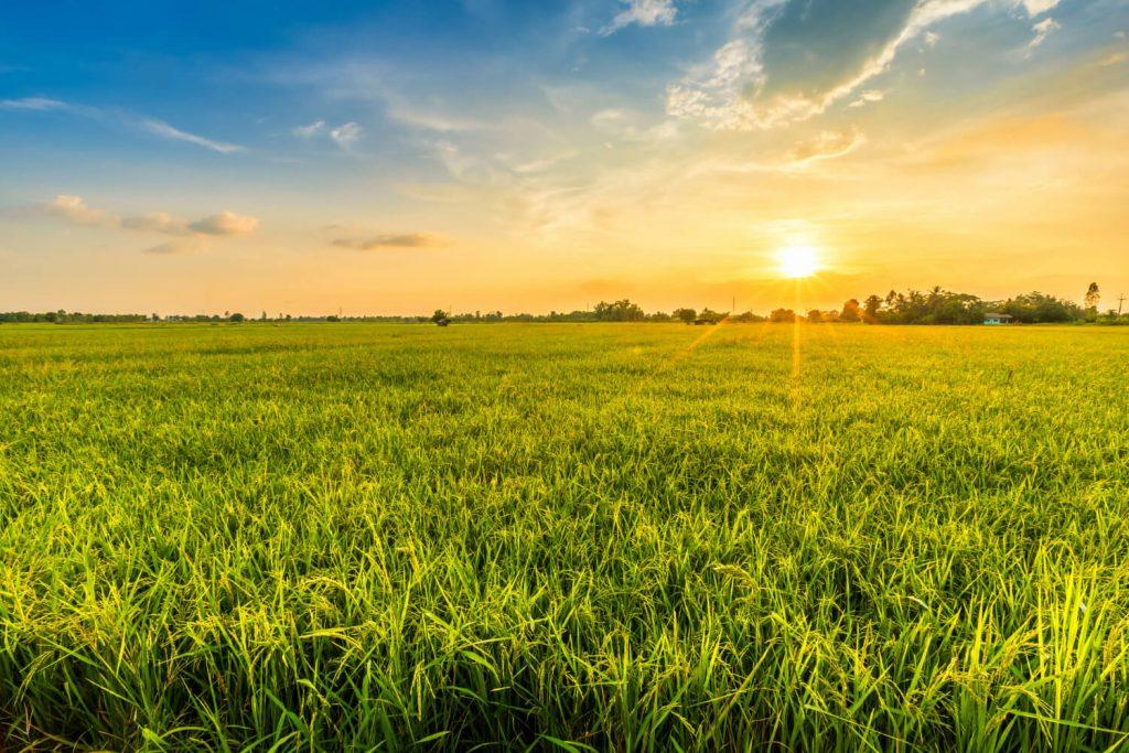 Biogazdálkodás: zöld válasz a klímaváltozásra